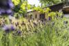 Idyllisch-historisches Haus mit Ausbaureserve und Schwimmteich - Die eigene Idylle